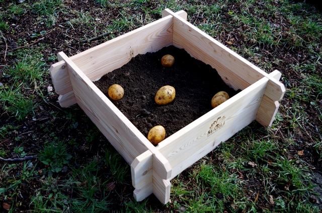 bramborovník2